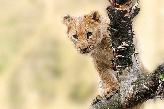 Safari Luxe Tanzanie